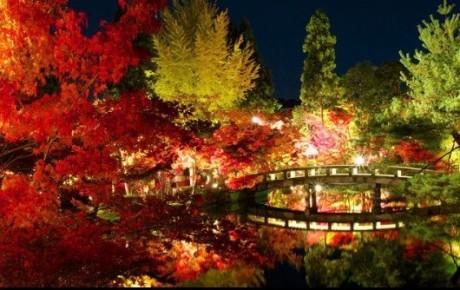 紅葉やイルミネーションの季節✨ゴッツでレンタカー借りてGO🚙